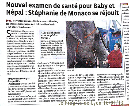 elephants-progreslyon160113.jpg