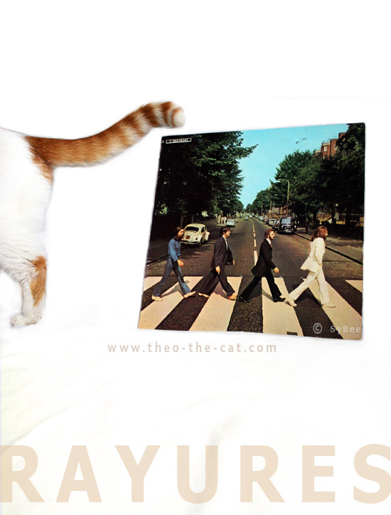 Theo cat et l'album Abbey Road (recto)