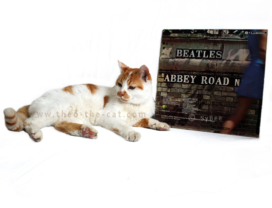 theo the cat et l'album Abbey Road (verso)