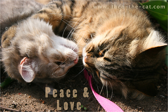 Lolly et Easy - peace and love cats